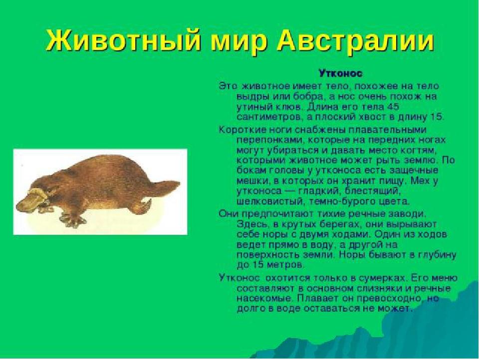 они необычные животные мира с описанием с картинками презентация составить его
