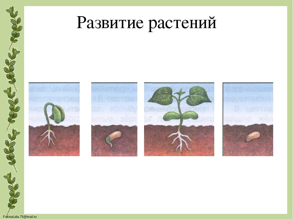 Развитие растения картинки