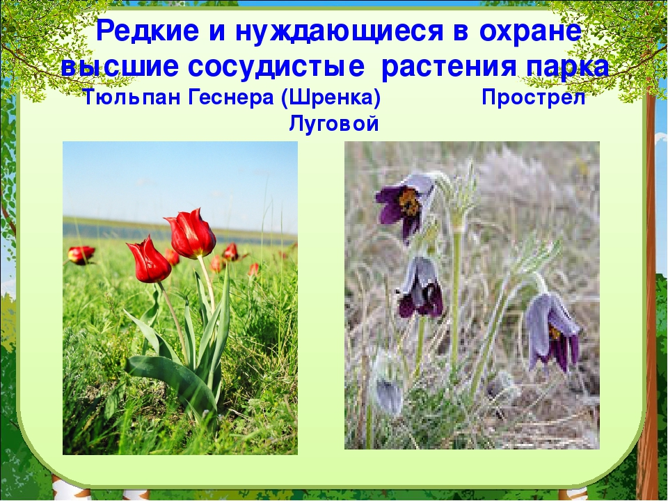 фотографии растений которые нуждаются в охране этапе