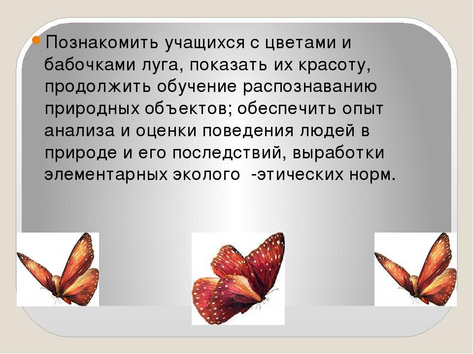 обучающие мультфильм почему мы не будем рвать цветы и ловить бабочек