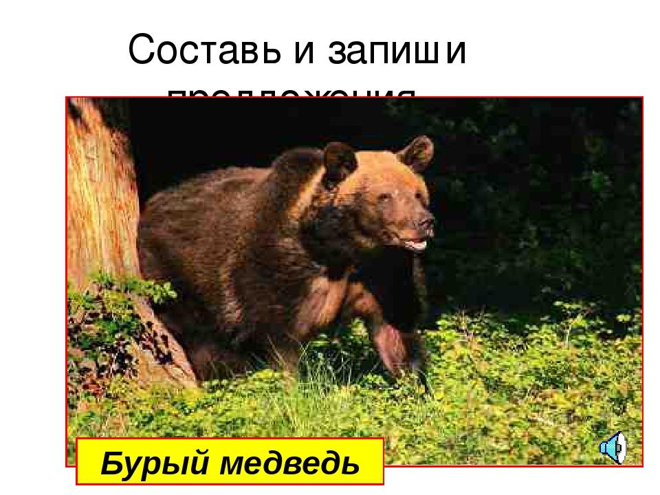 Составь и запиши предложения Бурый медведь