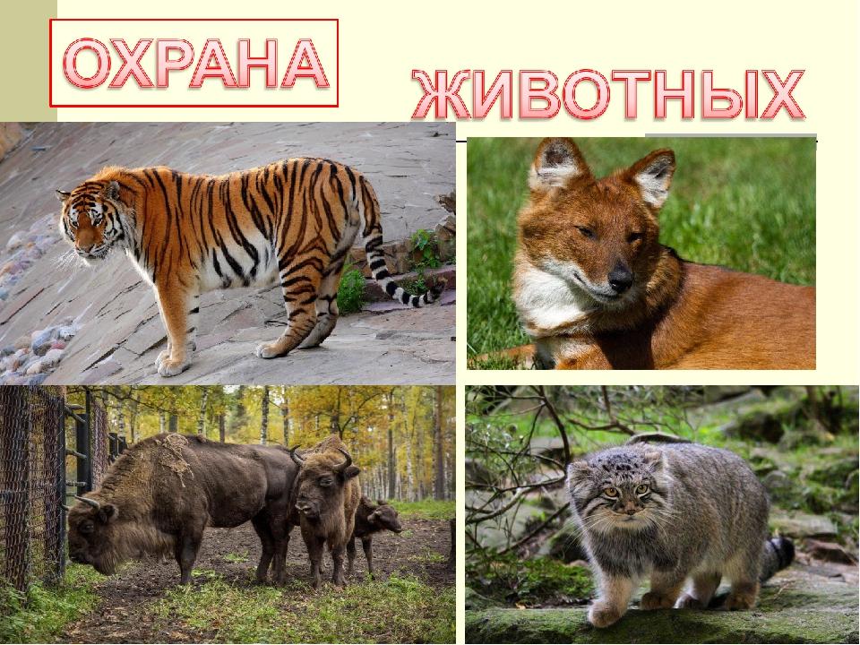 что картинки на охрану животных выбора элементов