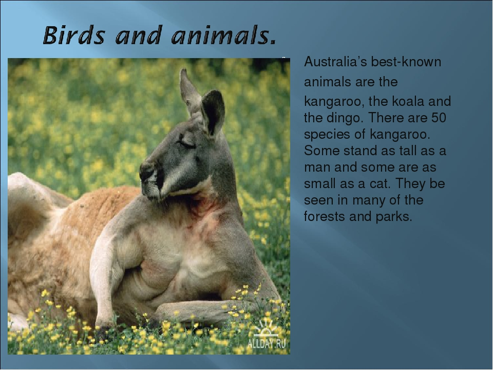 an analysis of the best known animals in australia