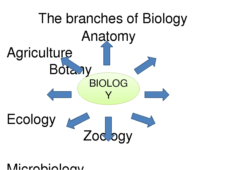 branches of biology Physiology is itself a branch of the larger discipline of biology dedicated to the form and function of organisms, physiology is a diverse and broad field that encompasses several sub-disciplines.
