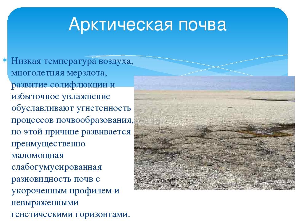 почва в российской арктике данной статье разберем