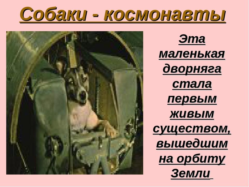 Собаки - космонавты Эта маленькая дворняга стала первым живым существом, выше...