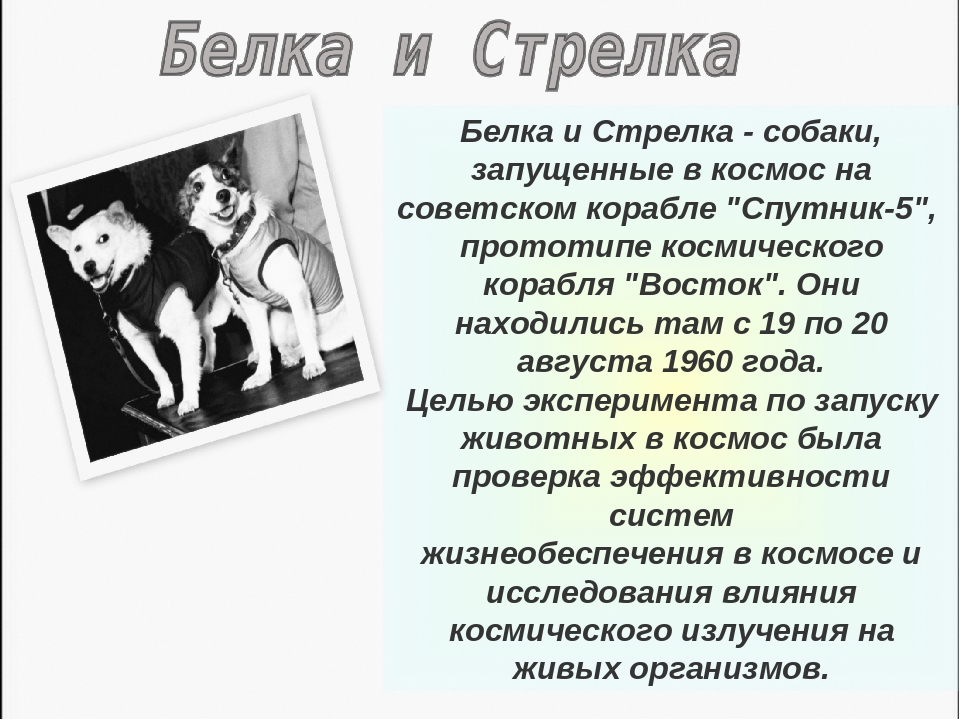"""Белка и Стрелка - собаки, запущенные в космос на советском корабле """"Спутник-5..."""