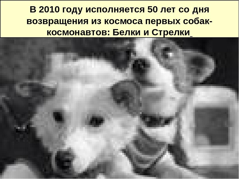 В 2010 году исполняется 50 лет со дня возвращения из космоса первых собак-ко...