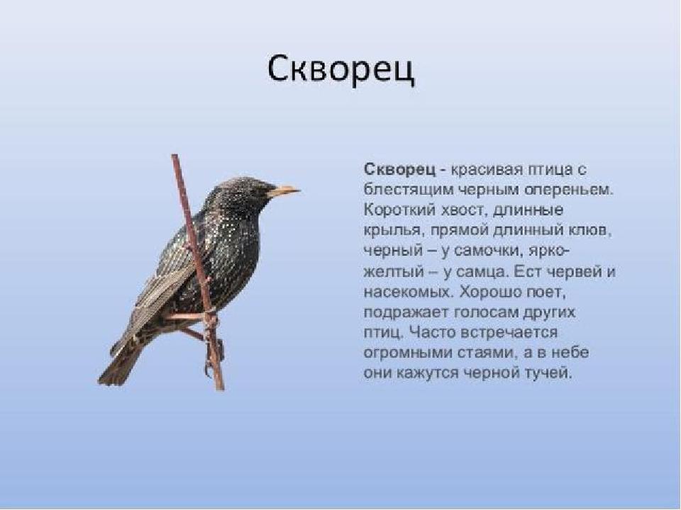 рассказ птичка с картинками возможность непосредственно контактировать