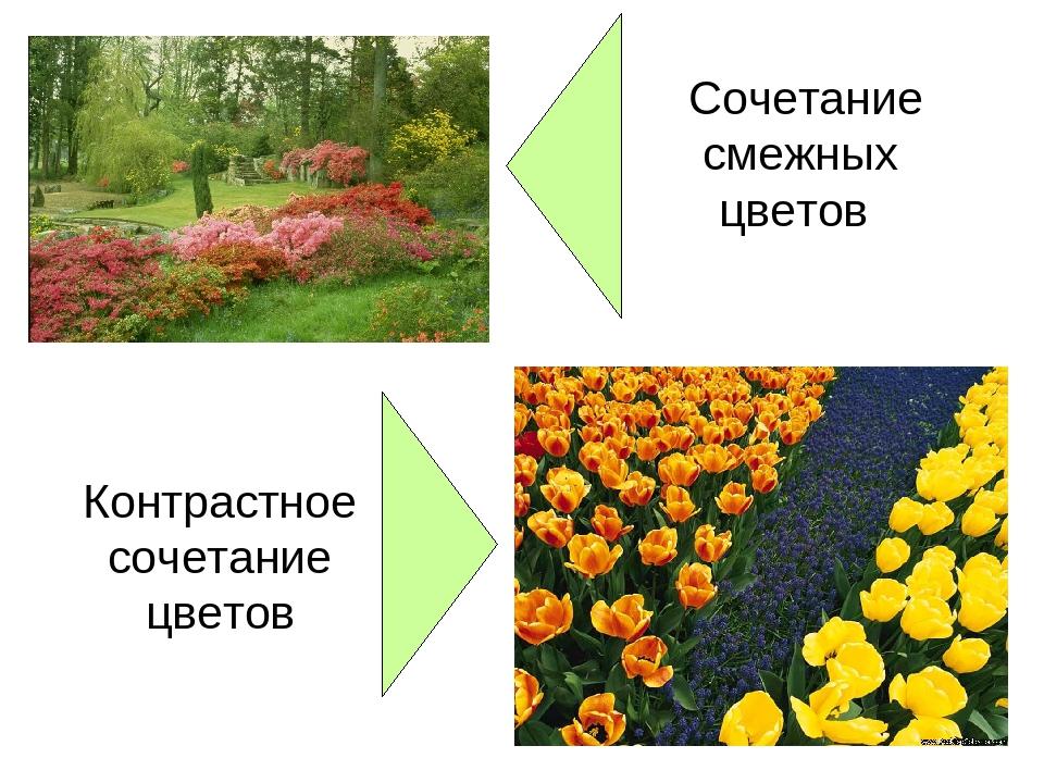 Сочетание смежных цветов Контрастное сочетание цветов