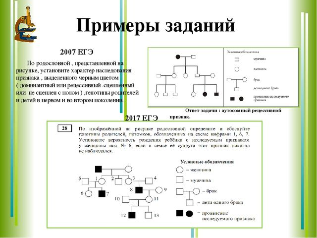 Решение задач на составление родословных сборник задач по физике мякишев решения
