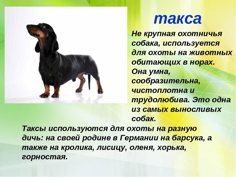 характеристика собак и картинки где