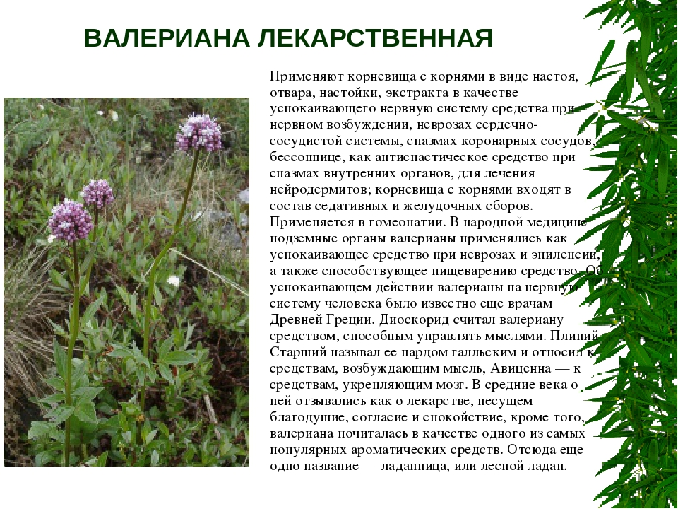 все лекарстеенные растения из приморья свойство влаговыводящего термобелья