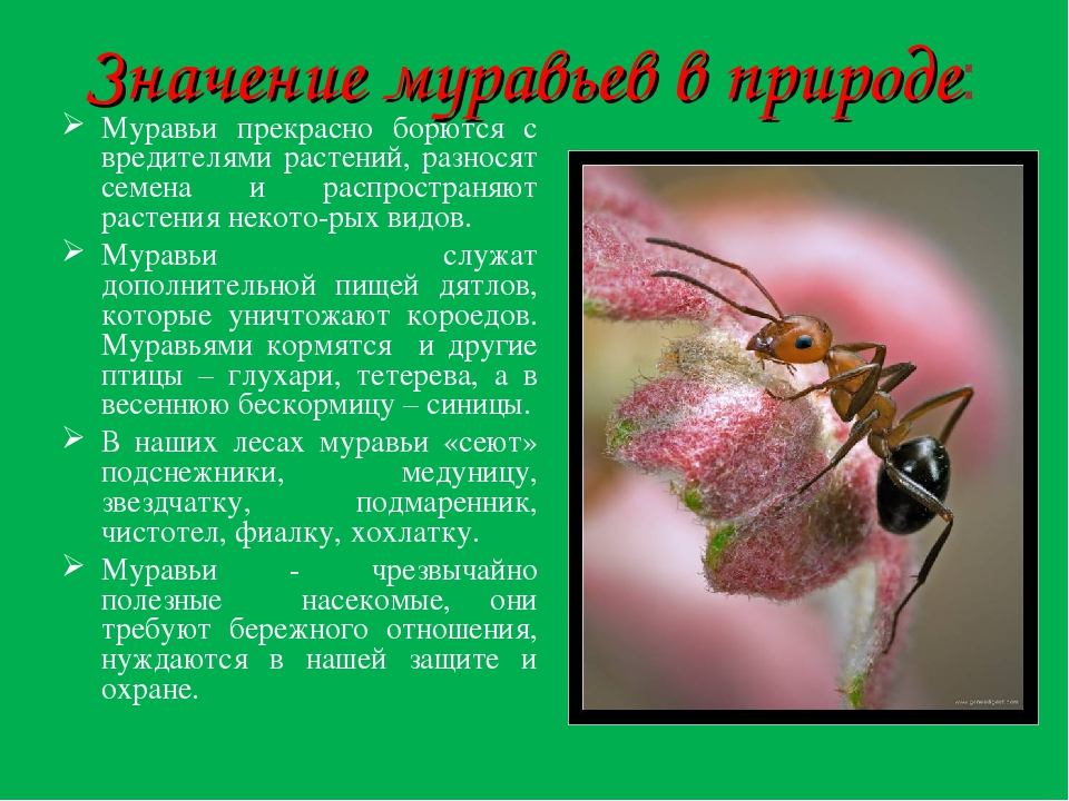 какие индивидуальности поведени¤ и вида жизни характерны дл¤ жителей муравейника