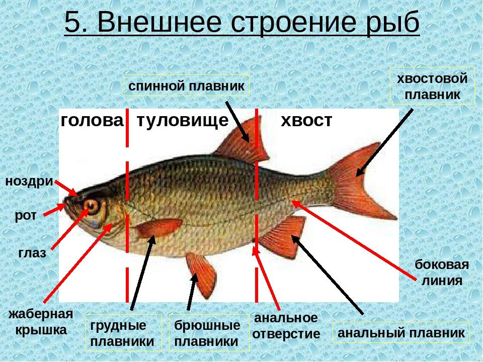 они из чего состоит рыба схема картинки ножи