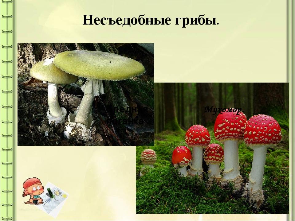 они название несъедобных грибов с фото и названиями хотя сегодня