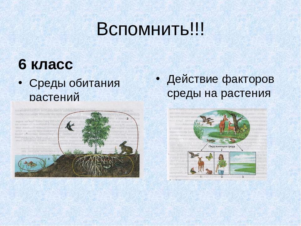 Вспомнить!!! 6 класс Среды обитания растений Действие факторов среды на расте...