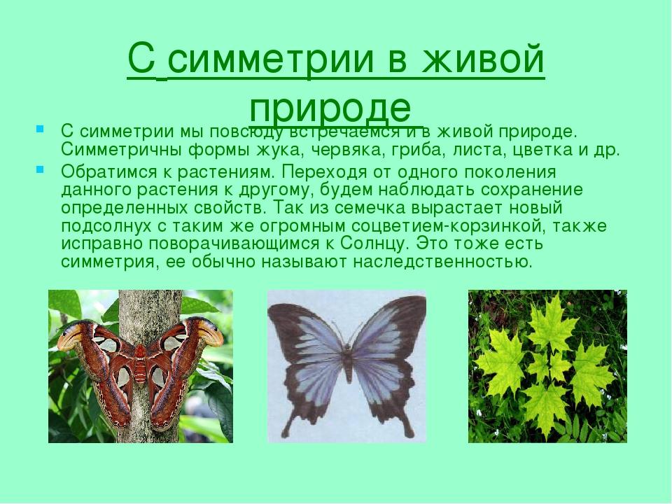 Симметрия в живой и неживой природе реферат 5237