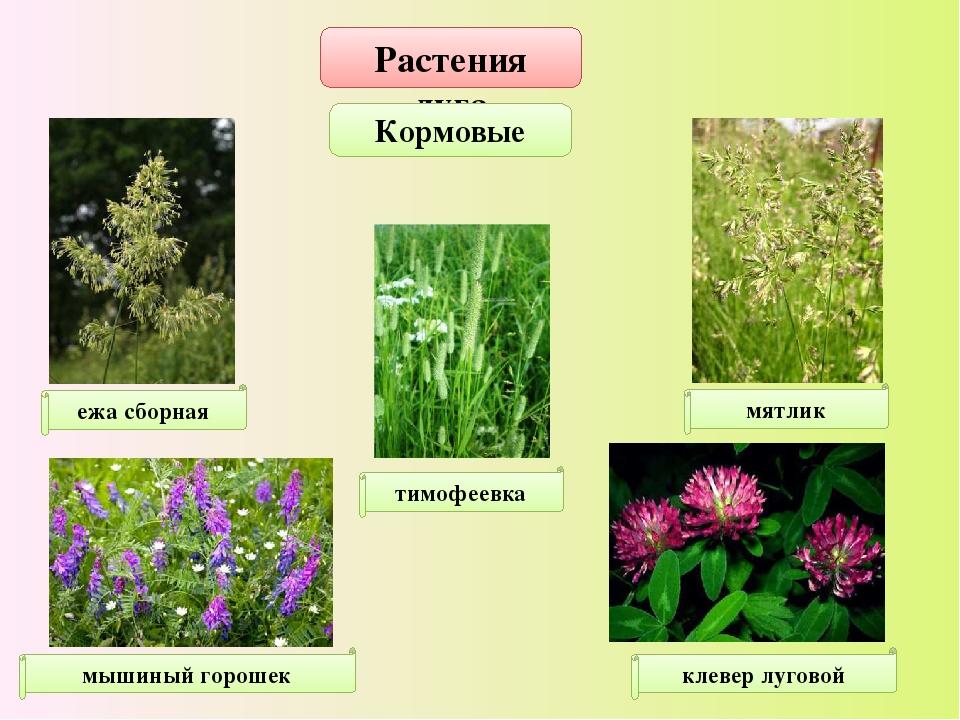 растения луга картинки с названиями может загрузить собственные