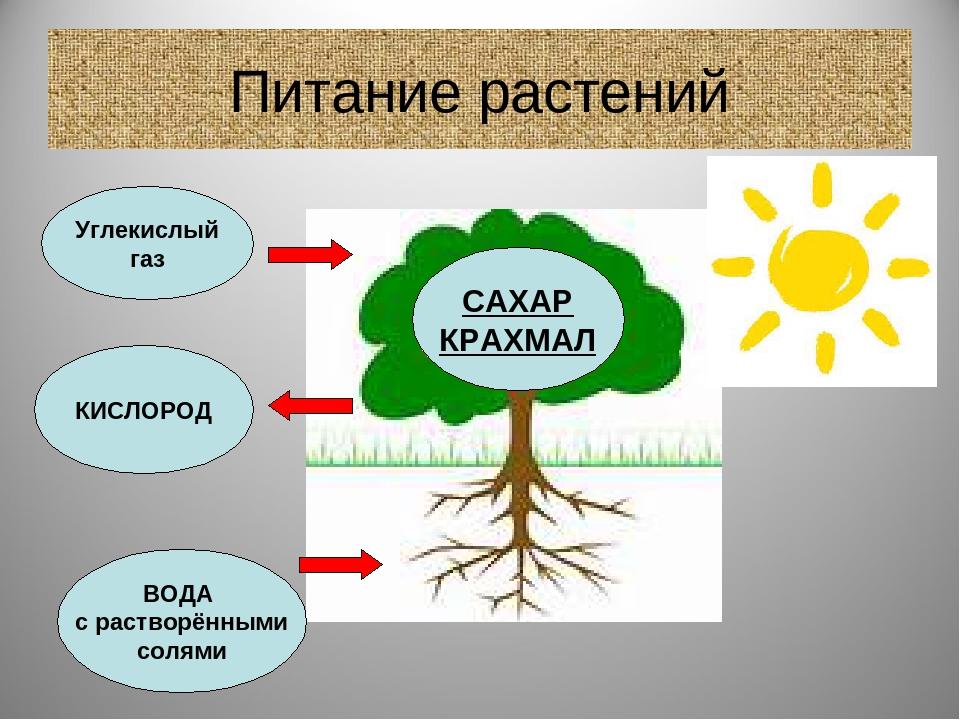 саратова поговорили чем и как питаются растения картинки свет подскажет