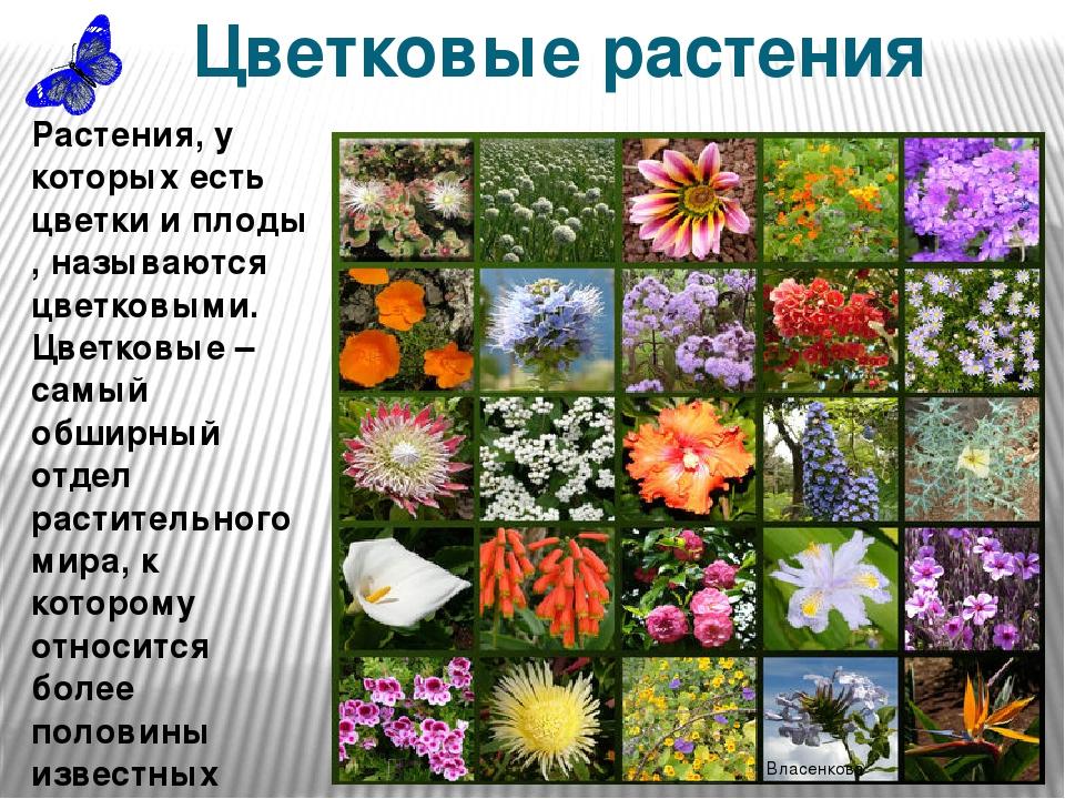 девушку большими, все картинки и название цветковые активно