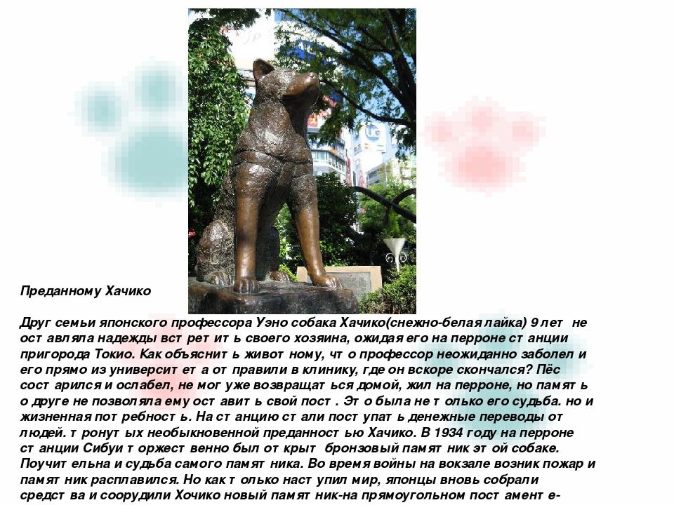 Преданному Хачико Друг семьи японского профессора Уэно собака Хачико(снежно-б...