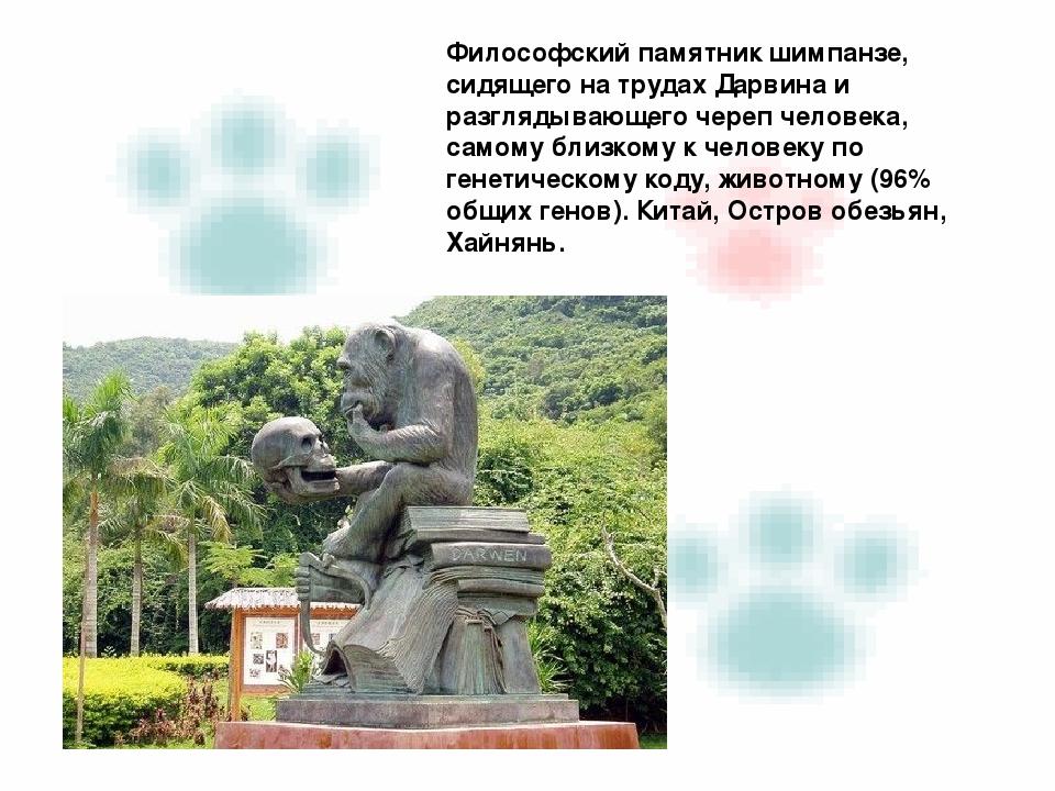 Философский памятник шимпанзе, сидящего на трудах Дарвина и разглядывающего...