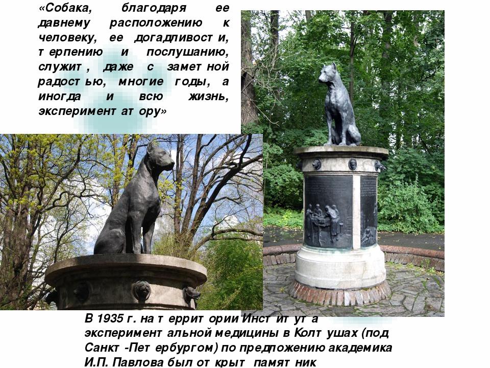 «Собака, благодаря ее давнему расположению к человеку, ее догадливости, терпе...