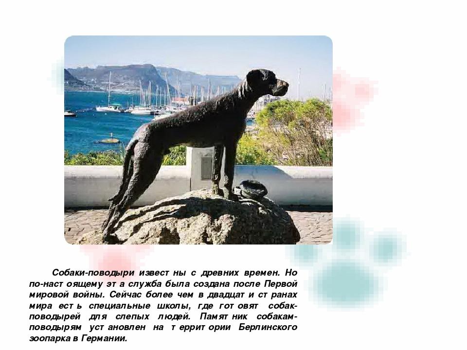 Собаки-поводыри известны с древних времен. Но по-настоящему эта служба была с...