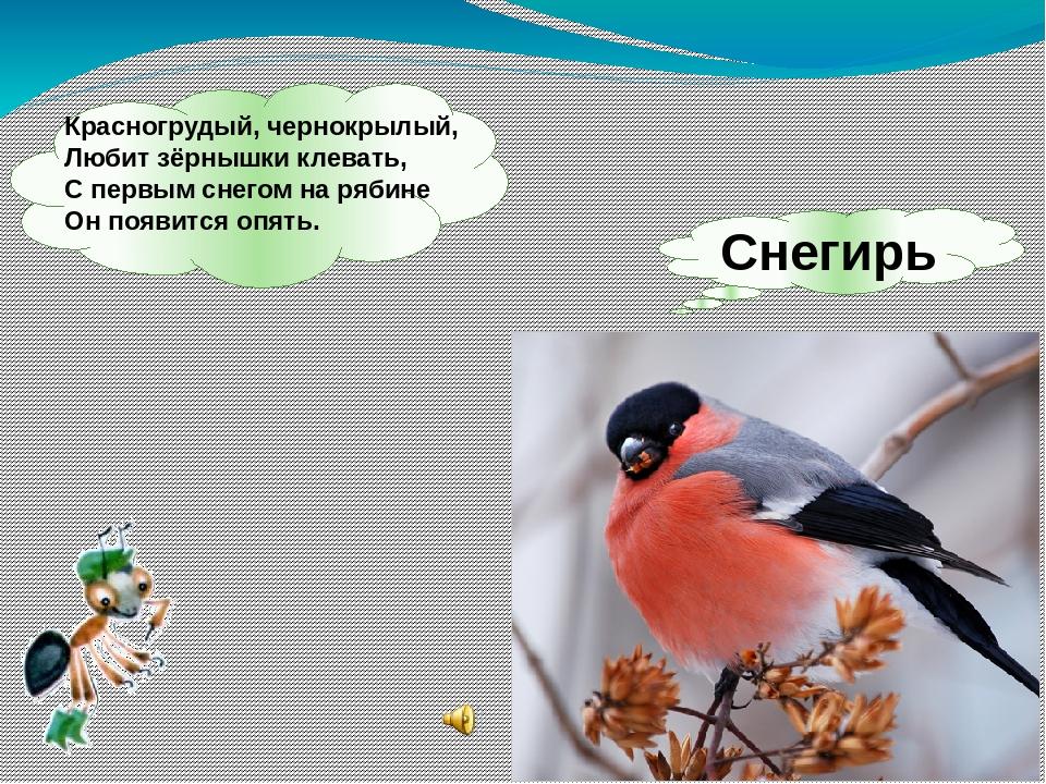 Снегирь Красногрудый, чернокрылый, Любит зёрнышки клевать, С первым снегом н...
