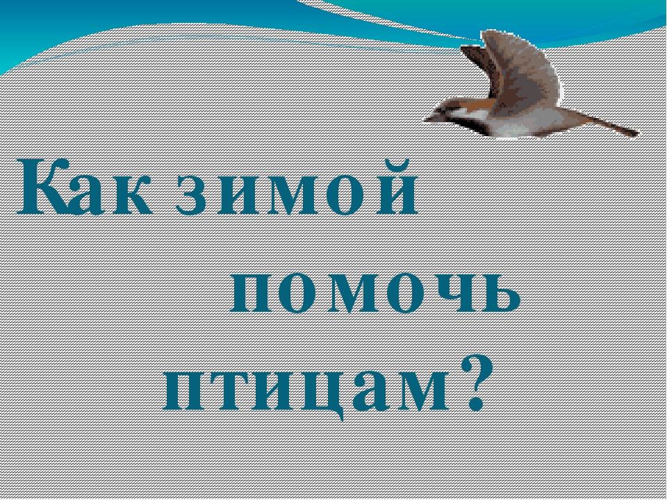 Как зимой помочь птицам?
