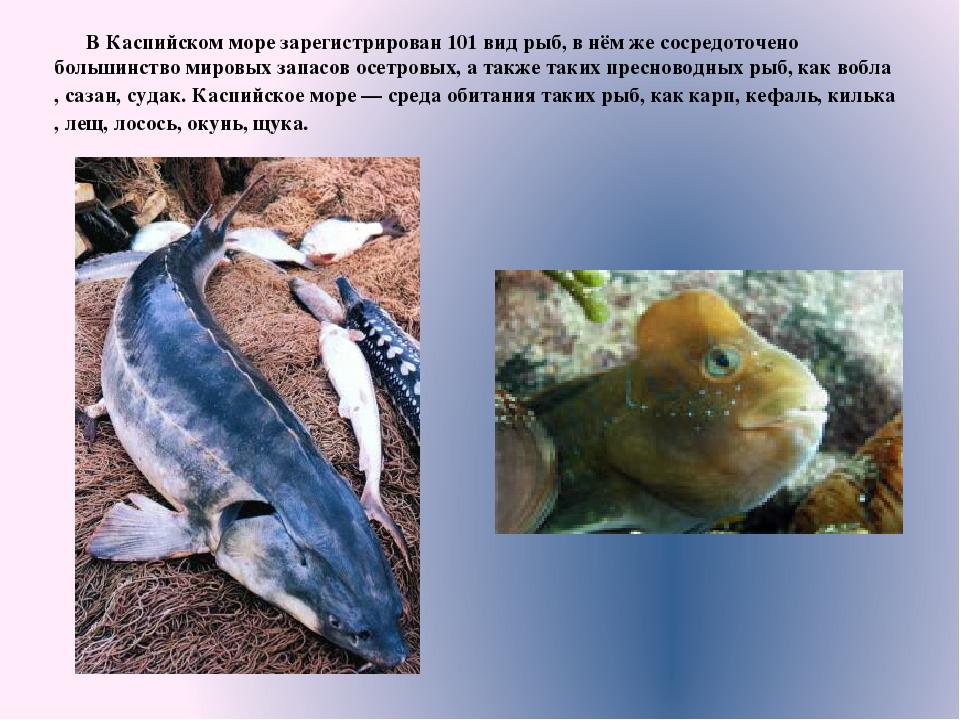 Рыба каспийского моря фото и названия