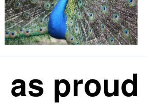 as proud as a peacock
