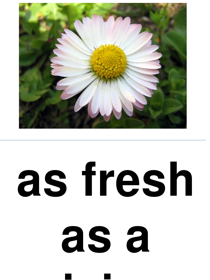 as fresh as a daisy