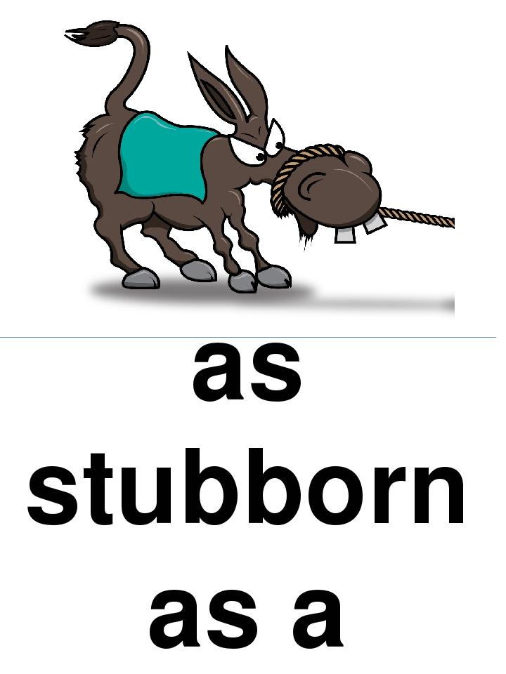 as stubborn as a mule