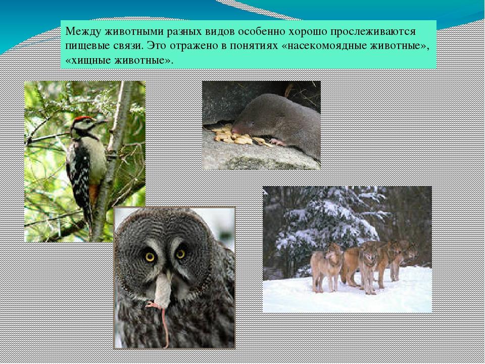 Взаимосвязь животных картинки