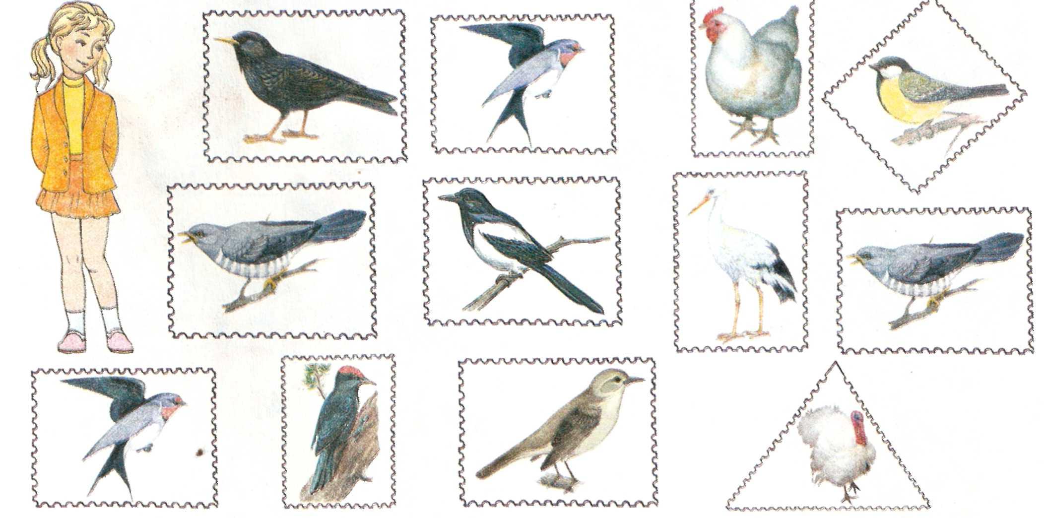 Картинки для средней группы зимующие птицы