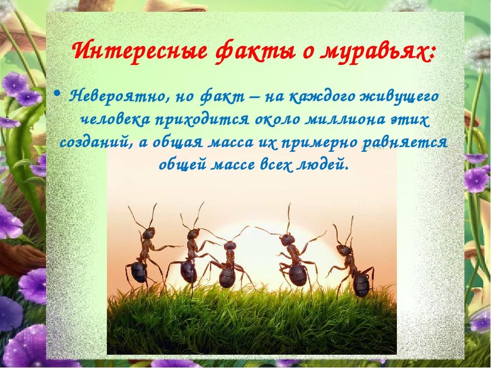 факты о муравьях в картинках рабства современной