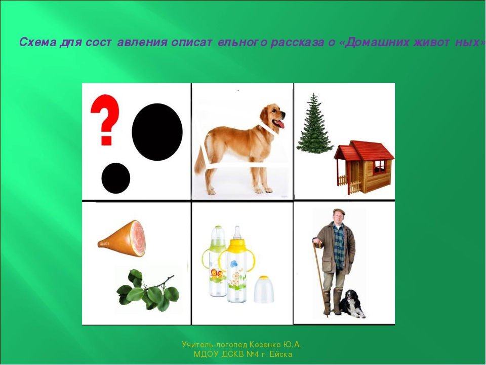 Картинки животных для описательного рассказа
