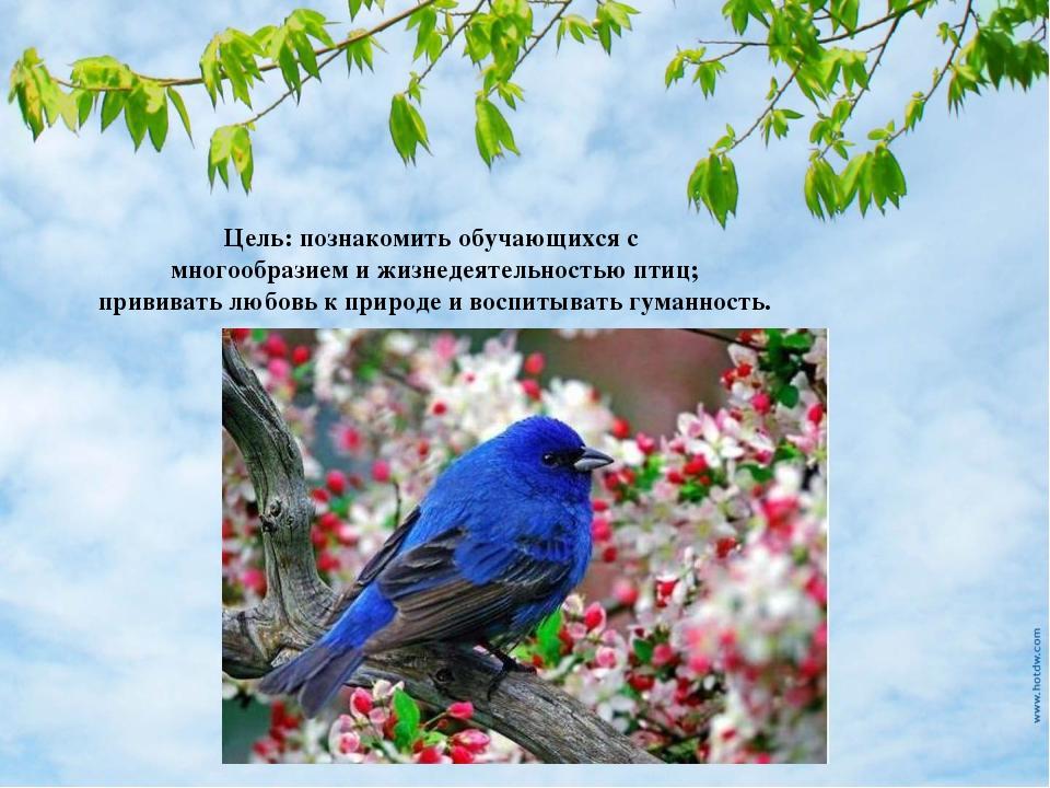 Цель: познакомить обучающихся с многообразием и жизнедеятельностью птиц; прив...