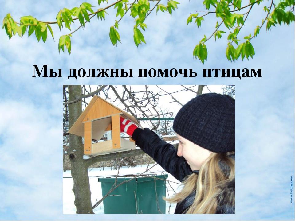 Мы должны помочь птицам