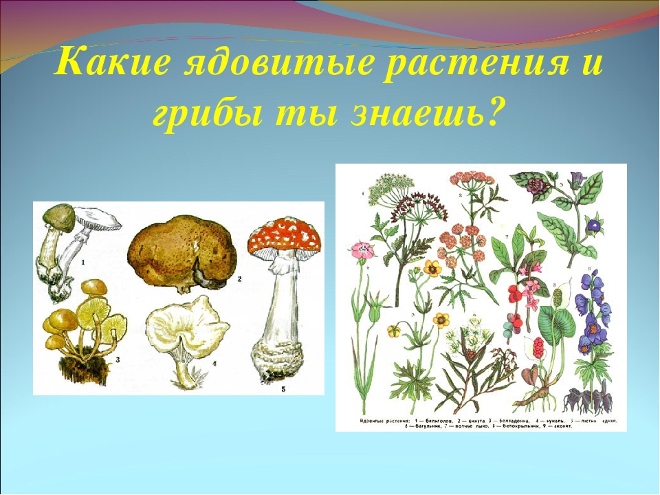 Рисунок для растений животных и грибов