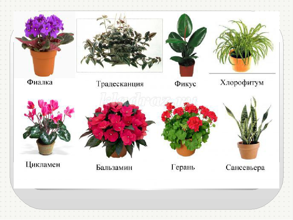 картинка и названия комнатных растений и цветов в интернет магазине днем