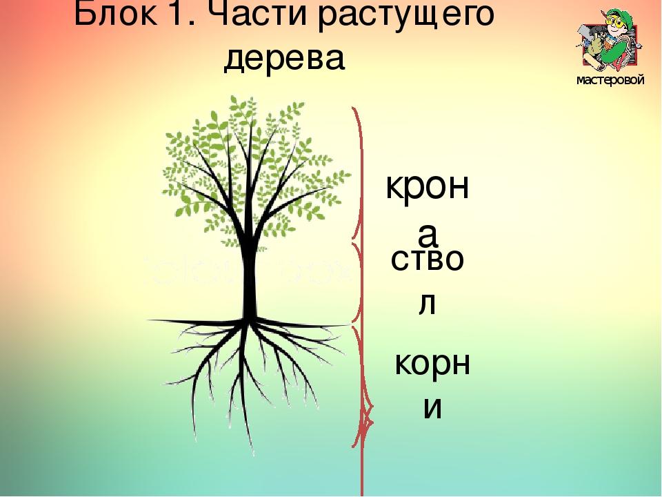 крона ствол корни мастеровой Блок 1. Части растущего дерева