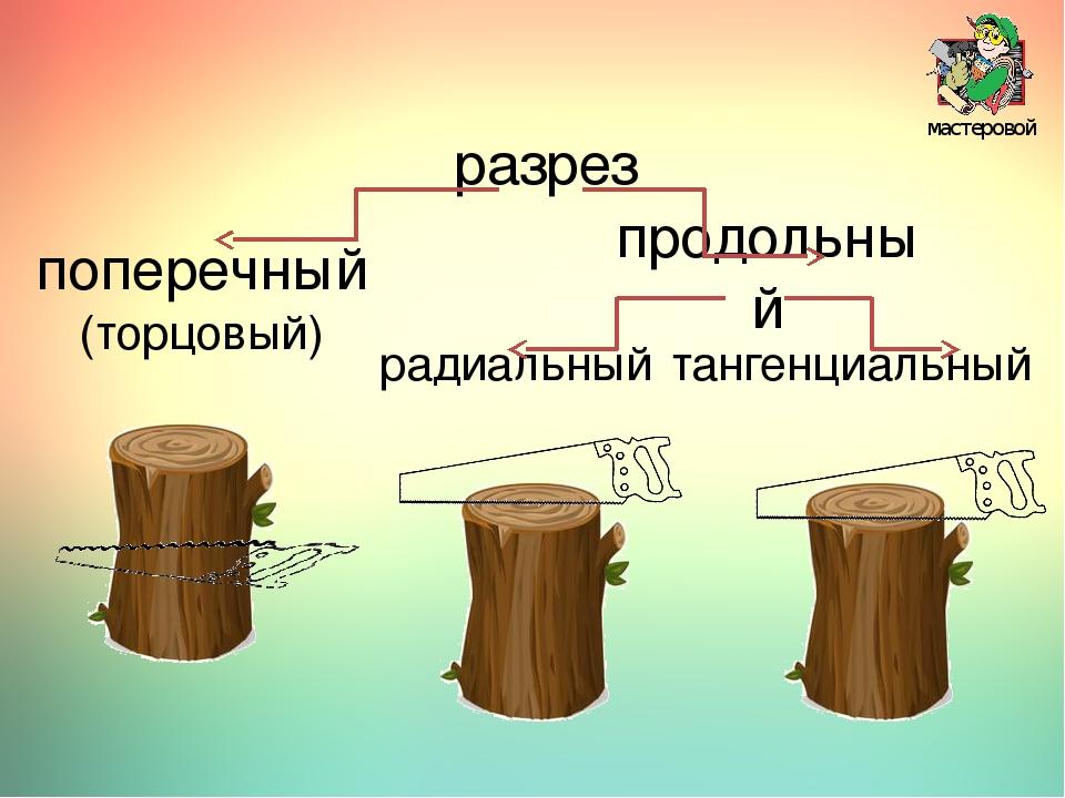 мастеровой разрез поперечный (торцовый) продольный радиальный тангенциальный