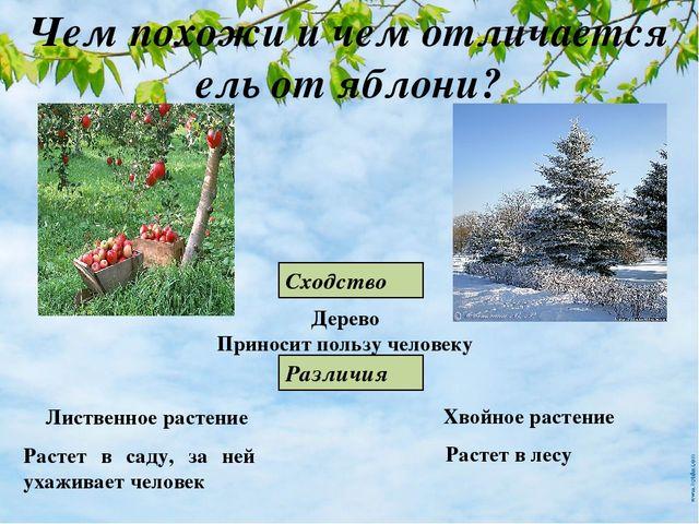 Доклад дикорастущие и культурные растения 5495