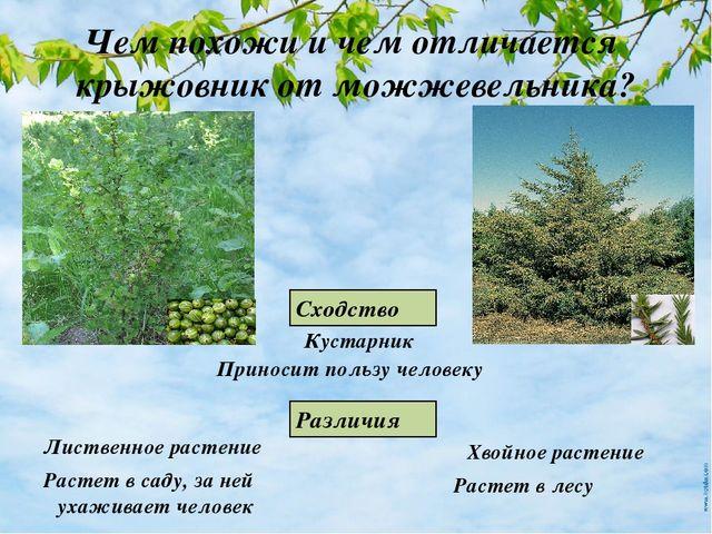 Урок пнш сколько живут растения 2 класс