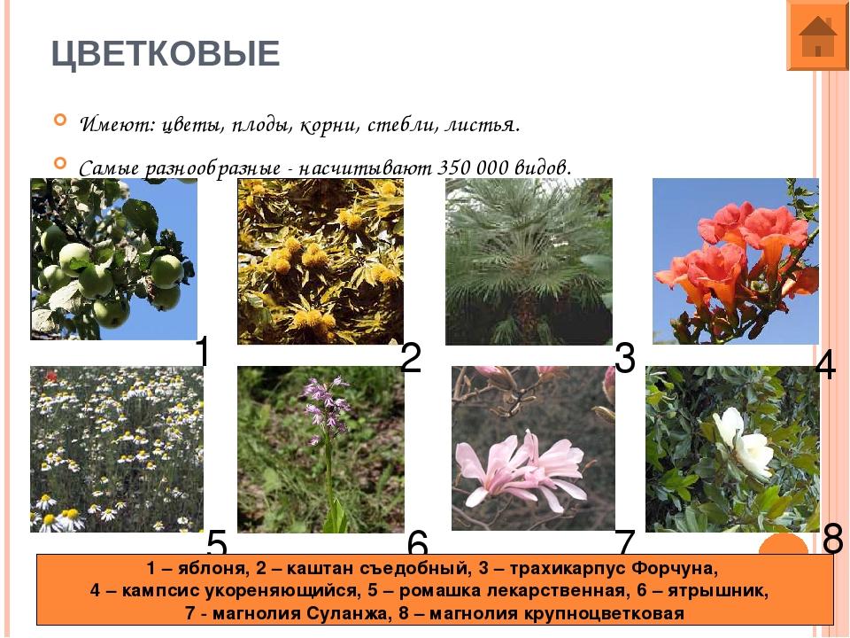 хотелось найти все картинки и название цветковые стояла великолепная