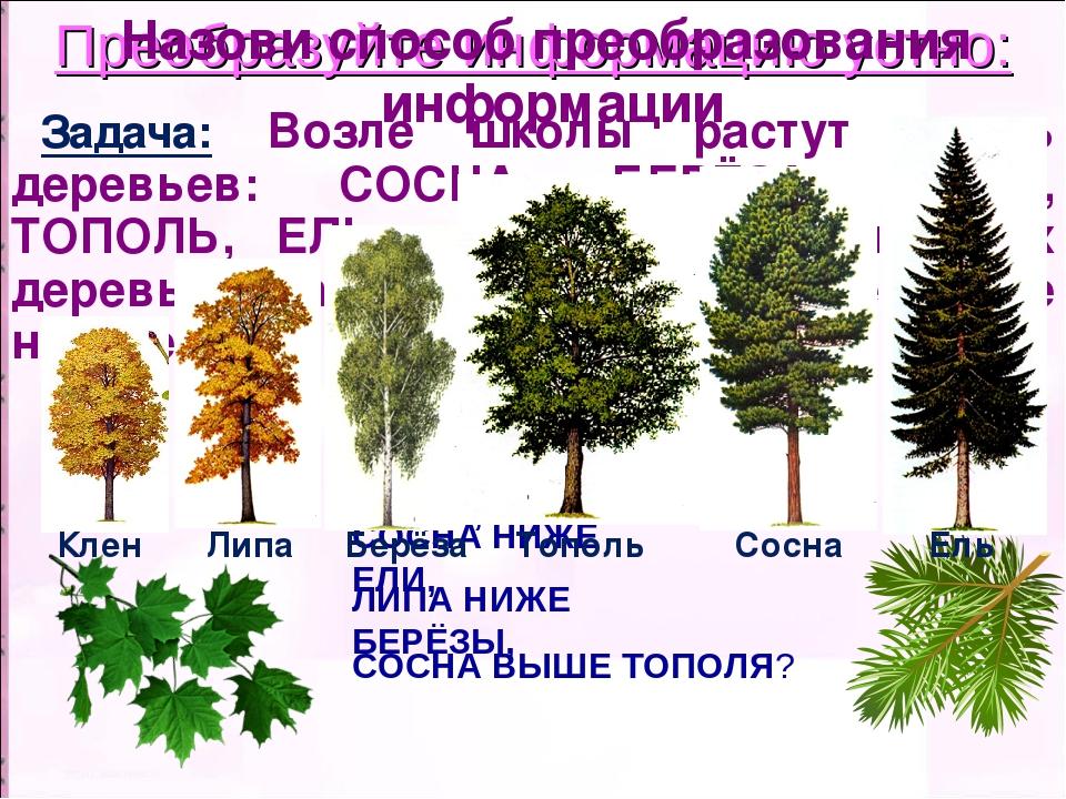 Преобразуйте информацию устно: Задача: Возле школы растут шесть деревьев: СОС...