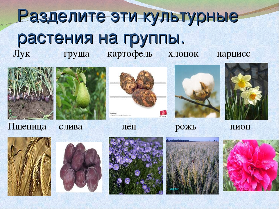 все культурные растения названия чулках широко раздвигает